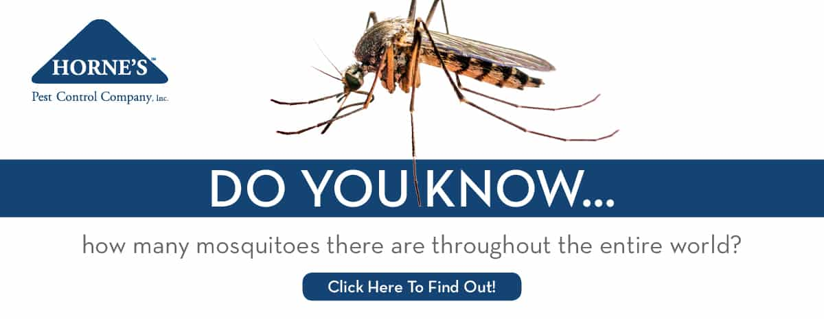 mosquitoes-horne's-pest-control